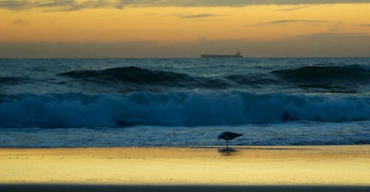 Bulli Beach Sunrise Panorama Yellow - Variant 9 with Seagull and Ship - Sandon Point Beach, Bulli